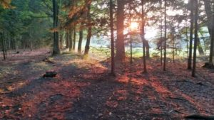 vděčnost třeba za procházku v lese s krásným západem slunce